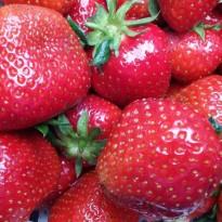 B-AK-Erdbeeren-1-r